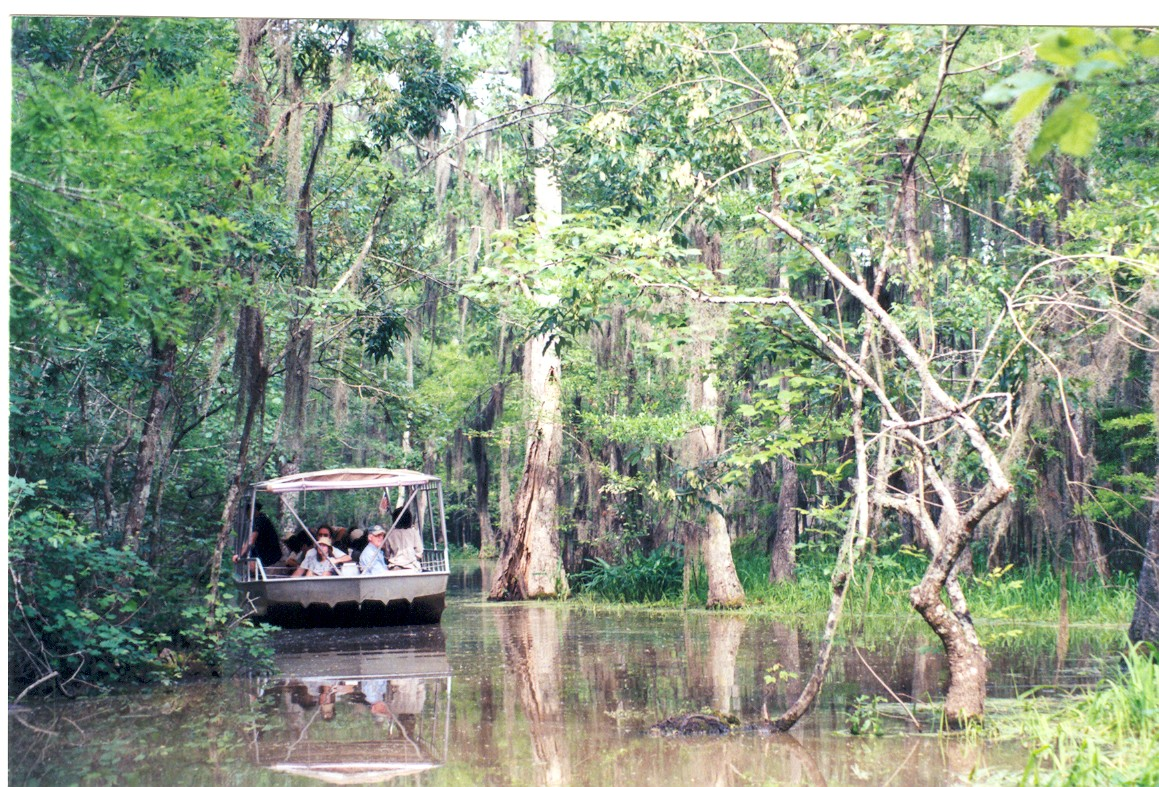 Tour Boat in the Honeywell Swamps, Louisiania