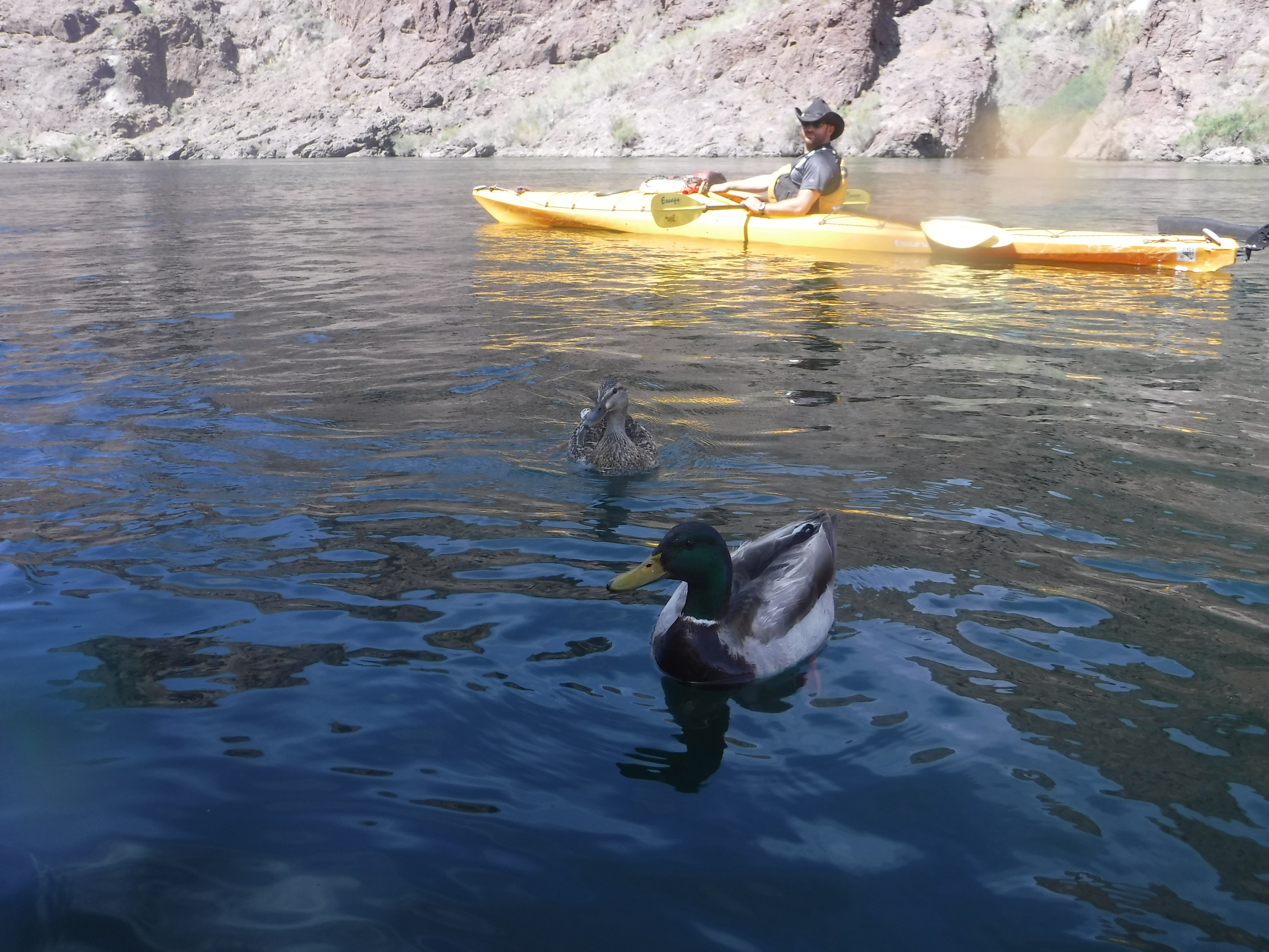 Local Ducks and Our Guide