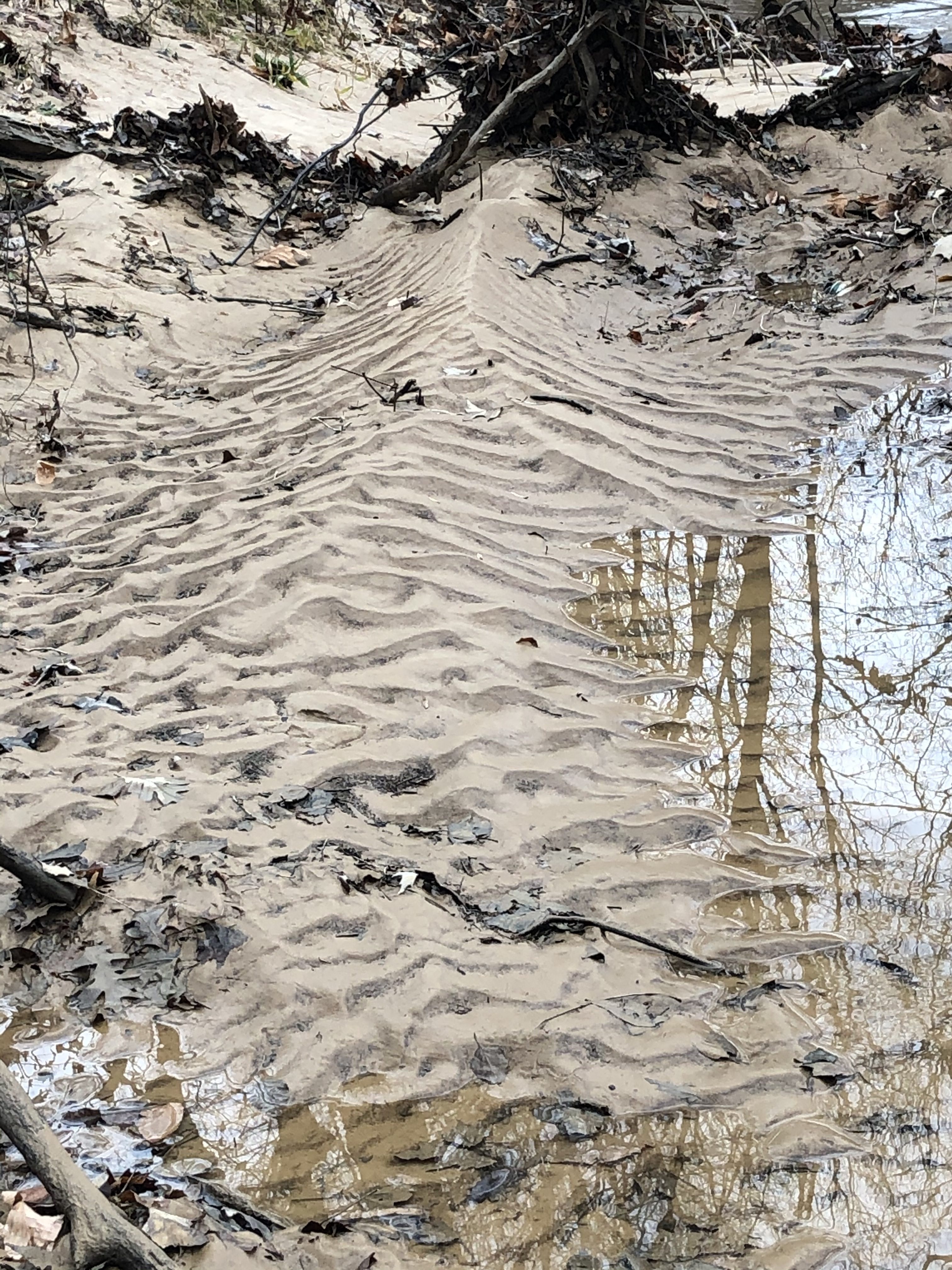 Ripples in the Sand