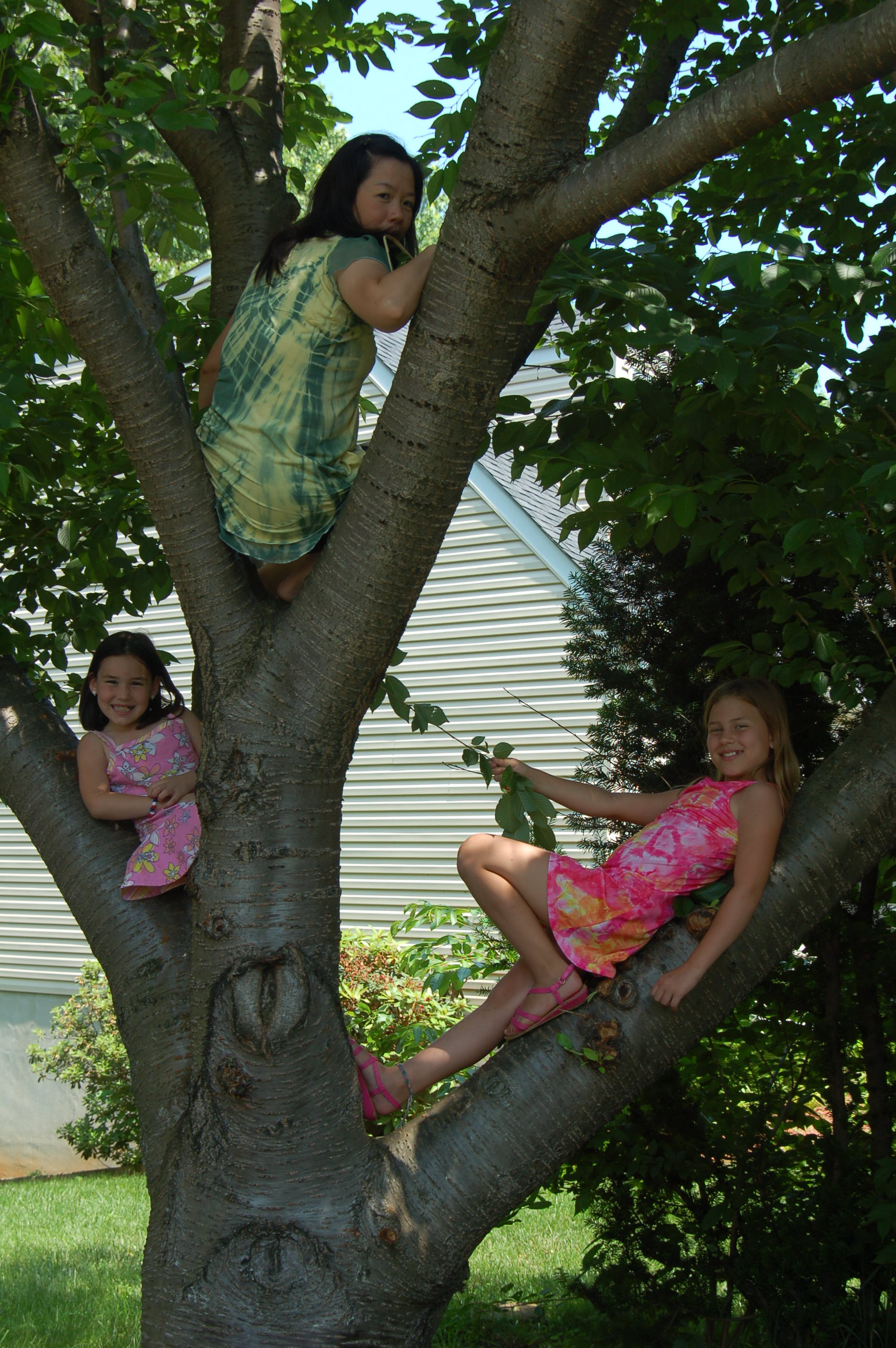 Winnie, Brooklyn, and Haven in a Tree