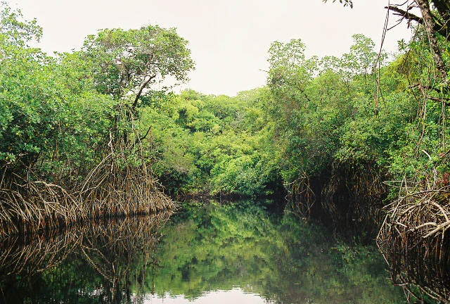 River lined with Mangroves