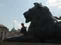 Winnie and The Lion